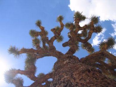 Joshua Tree!